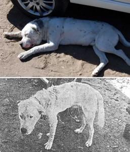 Las dos imágenes tomadas por la policía obran en el expediente y corresponden al mismo animal. La primera es del día del hecho. La segunda, al mes. Poco después murió.