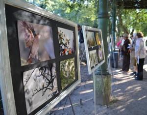 Muestra fotográfica-plaza Ramírez-2