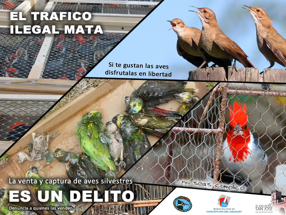 placa-trafico-ilegal-aves
